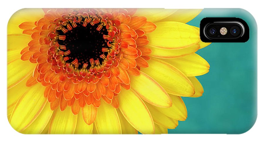 Gerbera IPhone X Case featuring the photograph Vibrance by Vanessa Thomas
