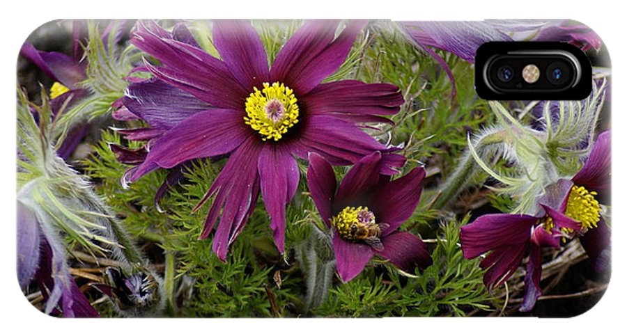 Flowers IPhone X Case featuring the photograph Welcome To The Garden by Ben Upham III