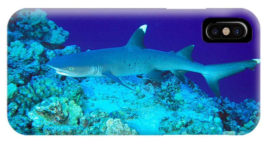 Above IPhone X Case featuring the photograph Whitetip Reef Shark by Dave Fleetham - Printscapes