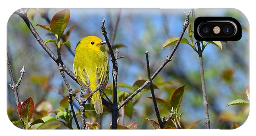 Lion's Den Warblers Jpg. 541 wilson's Warbler IPhone X Case featuring the photograph Wilson's Warbler by Chris Tennis