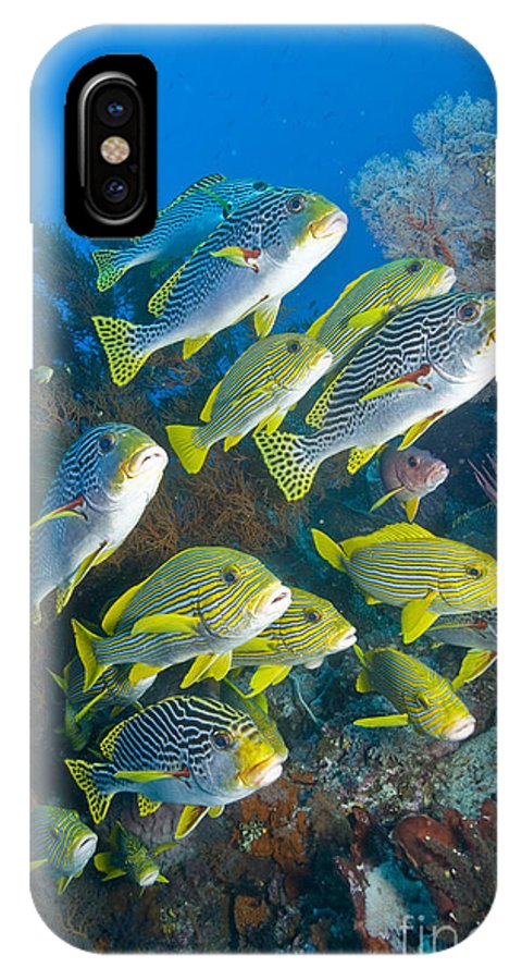 Sweetlip Fish IPhone X Case featuring the photograph Yellow And Blue Striped Sweeltip Fish by Mathieu Meur