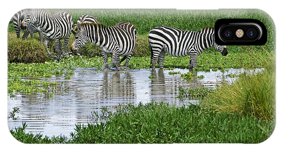 Africa IPhone X Case featuring the photograph Zebras In The Swamp by Michele Burgess