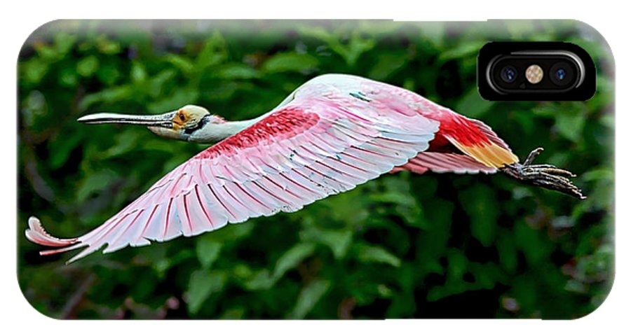 Bird IPhone X Case featuring the photograph Roseate Spoonbill In Flight by Lindy Pollard