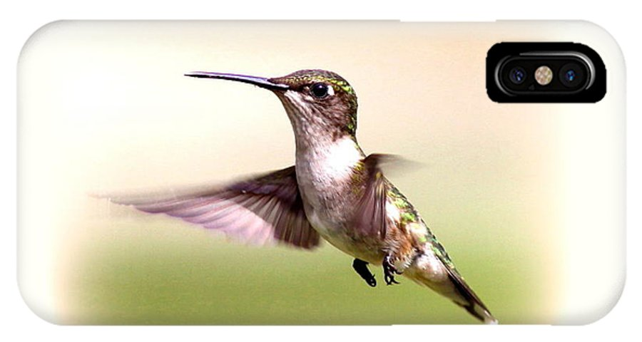 Hummingbird IPhone X / XS Case featuring the photograph 104757 - Hummingbird by Travis Truelove