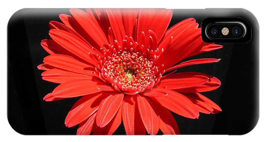 Gerbera Photographs IPhone X Case featuring the photograph 1067 by Kimberlie Gerner