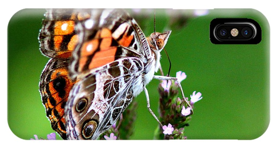 Butterfly IPhone X / XS Case featuring the photograph 1074- Butterfly by Travis Truelove