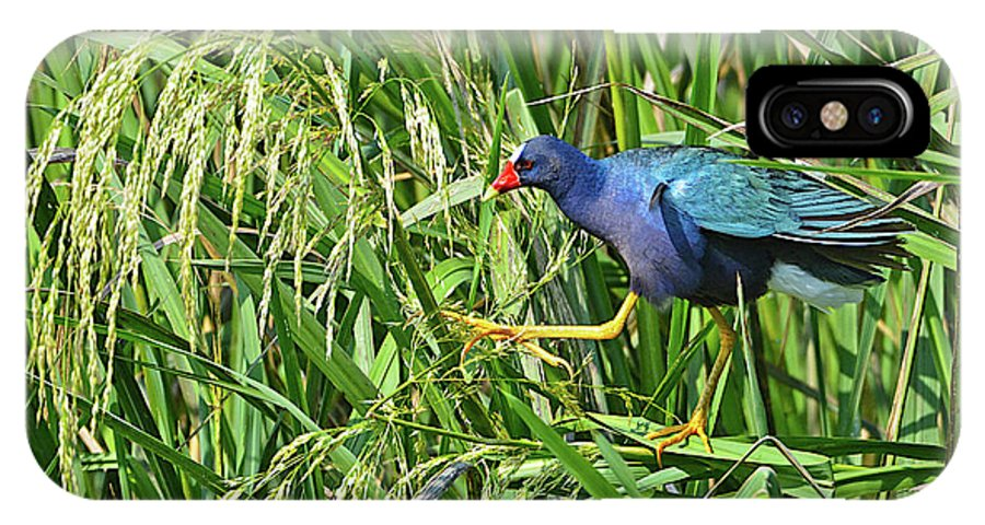 Bird IPhone X / XS Case featuring the photograph Purple Gallinule by Lindy Pollard