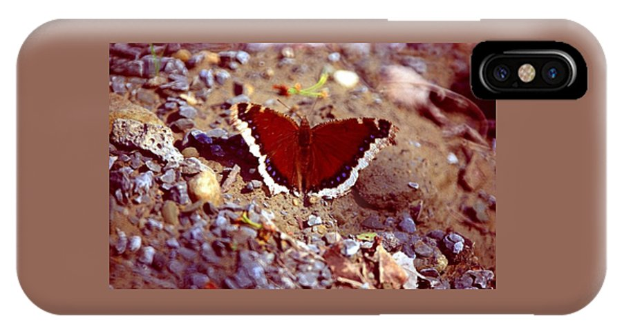 Butterfly IPhone Case featuring the photograph 113093-1 by Mike Davis