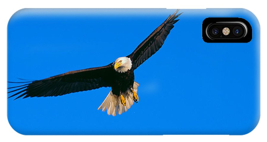 Afternoon IPhone X Case featuring the photograph Bald Eagle by John Hyde - Printscapes