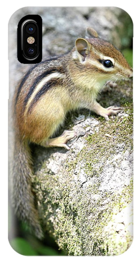 Chipmunk IPhone X Case featuring the photograph Chipmunk by Ken Keener