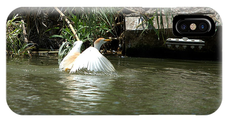 Roy Williams IPhone X Case featuring the photograph Cattle Egret Cooling Off In The Lake by Roy Williams