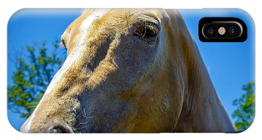 Horse IPhone X Case featuring the photograph Untitled by Scott Burns