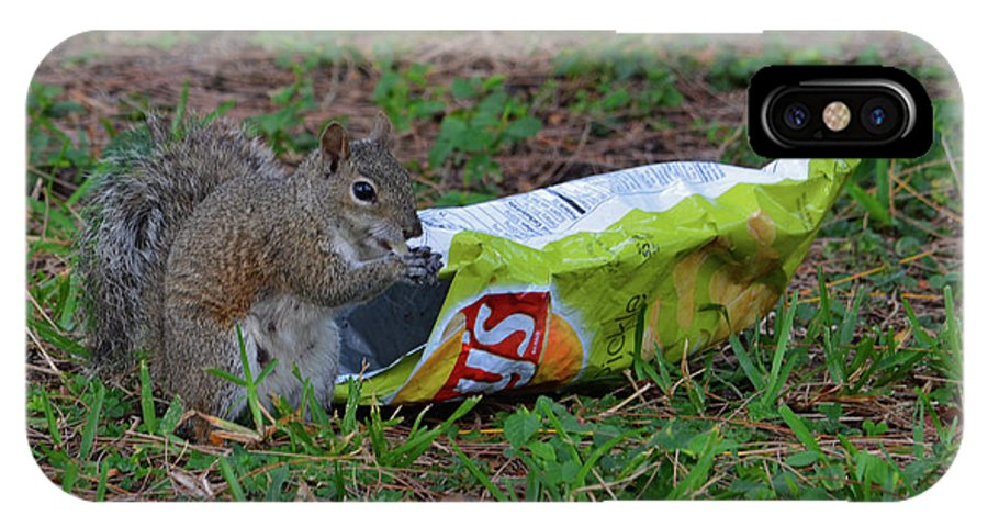 Wildlife IPhone X / XS Case featuring the photograph 14- Chip Lovin' Squirrel by Joseph Keane