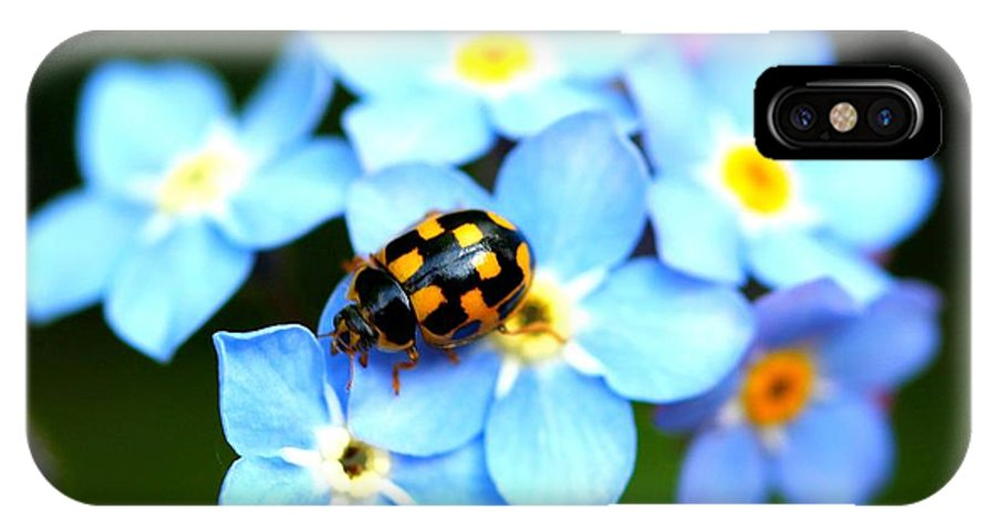 Bugs IPhone X Case featuring the photograph 14 Spot Ladybird by Adrian Cooch