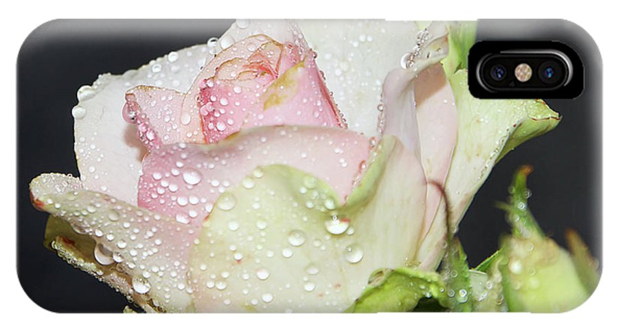 Flowers IPhone X Case featuring the photograph Pink Rose by Elvira Ladocki