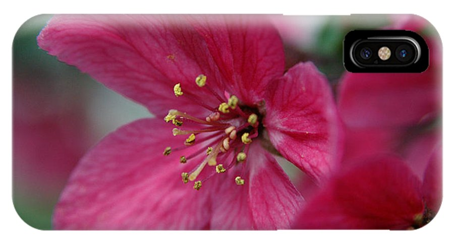 Flora IPhone Case featuring the photograph Untitled by Kathy Schumann
