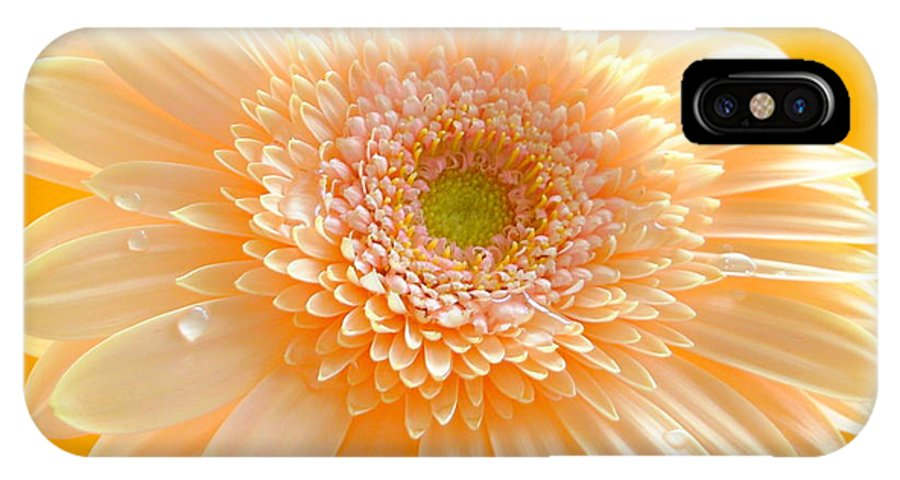 Gerber Photographs IPhone X Case featuring the photograph 1527-004 by Kimberlie Gerner