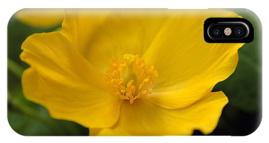 Yellow IPhone X Case featuring the photograph Untitled by Kathy Schumann
