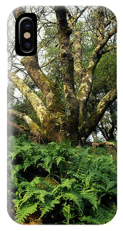 Ferns IPhone X Case featuring the photograph 1b6339 Frens And Oaks On Our Mountain by Ed Cooper Photography