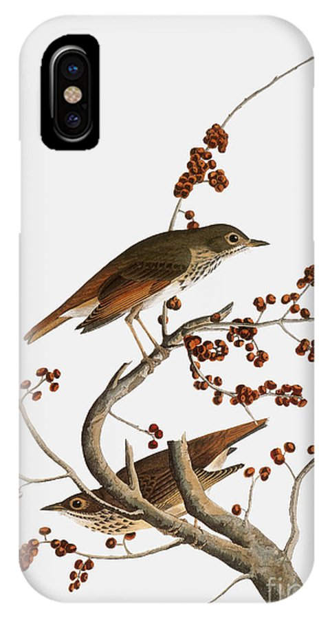 1838 IPhone X Case featuring the photograph Audubon: Thrush by Granger