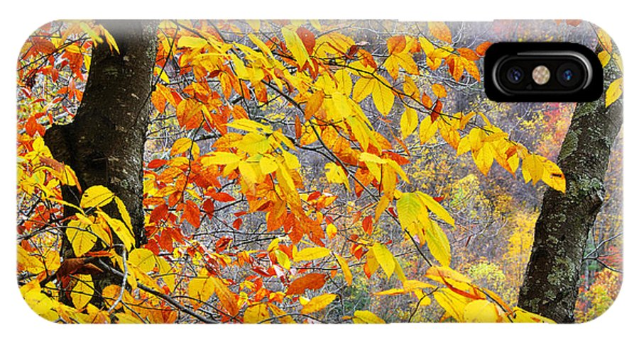 Autumn IPhone X Case featuring the photograph Autumn Beech Leaves by Thomas R Fletcher