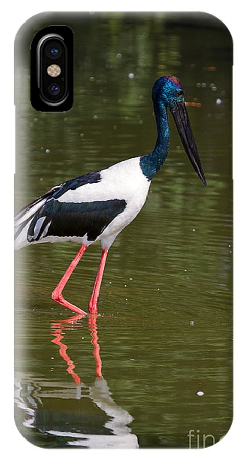 Bird IPhone X Case featuring the photograph Black-necked Stork by Louise Heusinkveld
