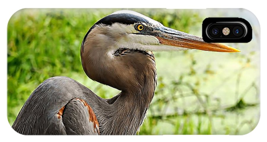 Blue Heron Heads Up IPhone X Case featuring the photograph Blue Heron Heads Up by William Bosley