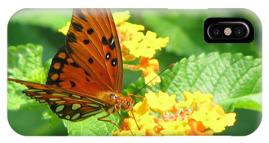 Butterfly IPhone X Case featuring the photograph Butterfly by Amanda Barcon