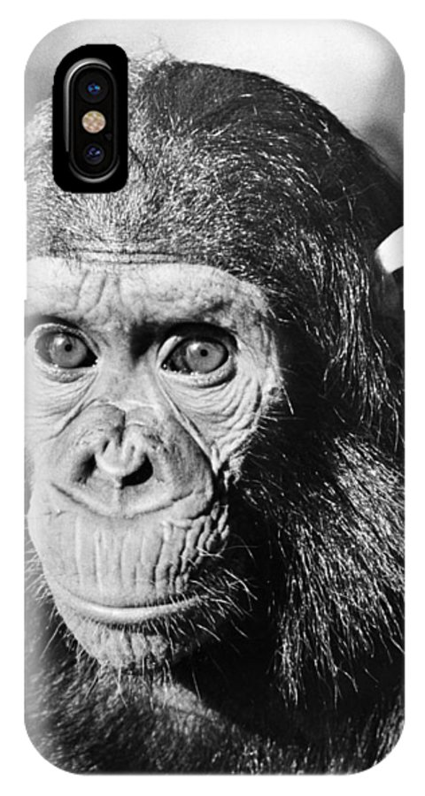 20th Century IPhone X Case featuring the photograph Chimpanzee by Granger