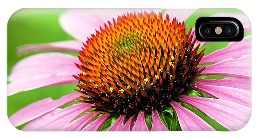 Cone Flower IPhone X Case featuring the photograph Cone Flower by Larry Ricker