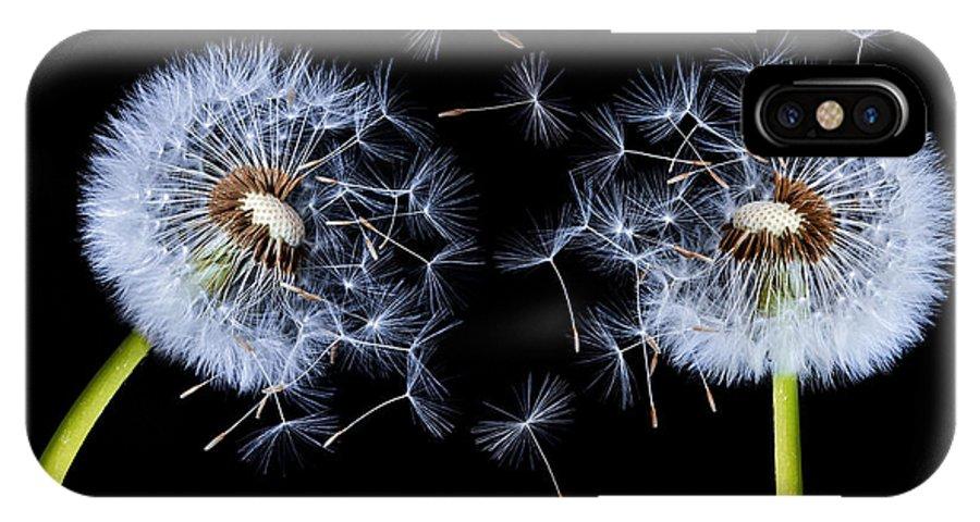 Dandelion On Black Background Iphone X Case