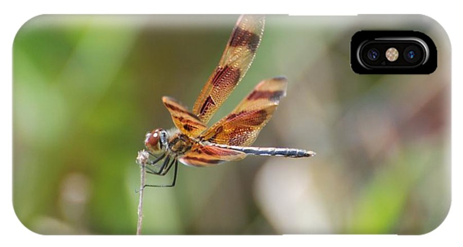 Nature IPhone Case featuring the photograph Dragon Fly by Rob Hans