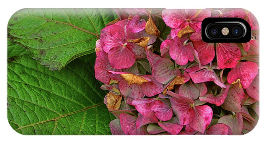 Hydrangea IPhone X Case featuring the photograph Endless Summer by JAMART Photography