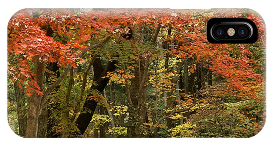Autumn IPhone X Case featuring the photograph Forest In Autumn by Michele Burgess