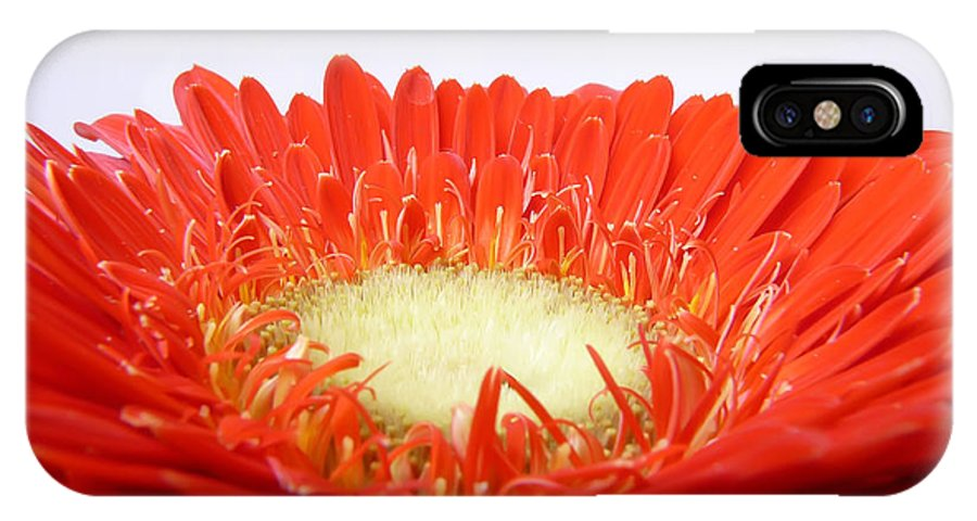 Gerbera IPhone X Case featuring the photograph Gerbera by Daniel Csoka