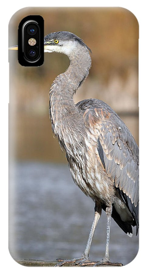 Great Blue Heron IPhone X Case featuring the photograph Great Blue Heron In Stanley Park Vancouver by Pierre Leclerc Photography