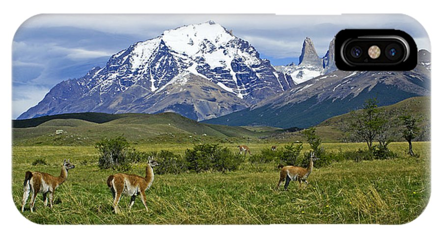 Patagonia IPhone X Case featuring the photograph Guanacos In Torres Del Paine by Michele Burgess