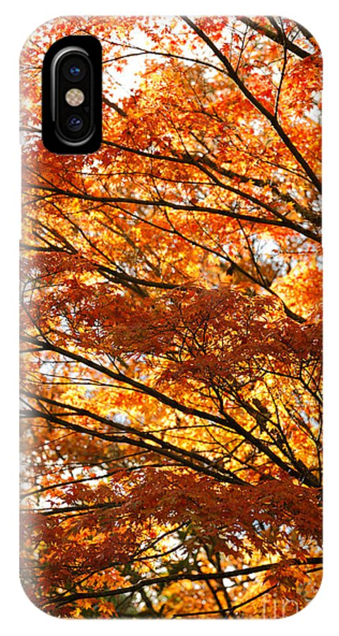 Maple IPhone X Case featuring the photograph Maple Tree Foliage by Gaspar Avila