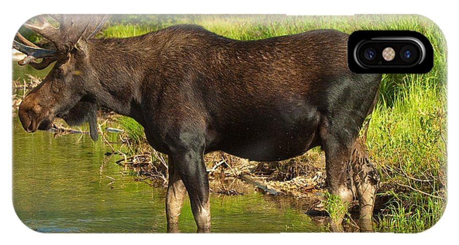 Bull Moose IPhone X Case featuring the photograph Moose by Sebastian Musial