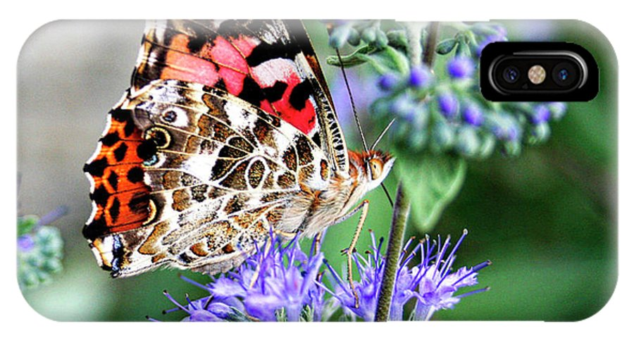 Painted IPhone X Case featuring the photograph Painted Lady Butterfly by Margie Wildblood