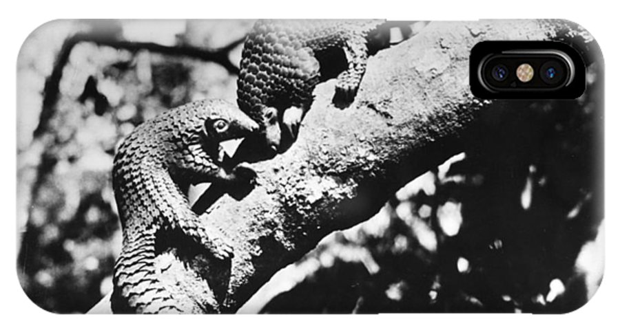 20th Century IPhone X Case featuring the photograph Pangolin by Granger