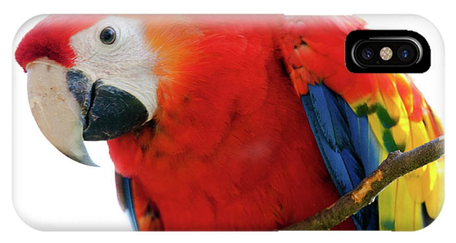 Parrot IPhone X Case featuring the photograph Parrot by Hristo Shanov