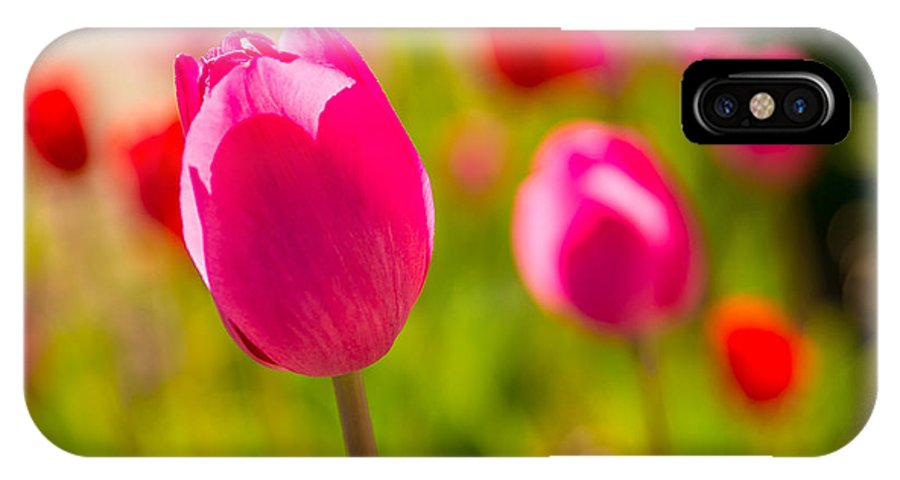 Flowers IPhone X Case featuring the photograph Pink Tulips by Beverly Tabet