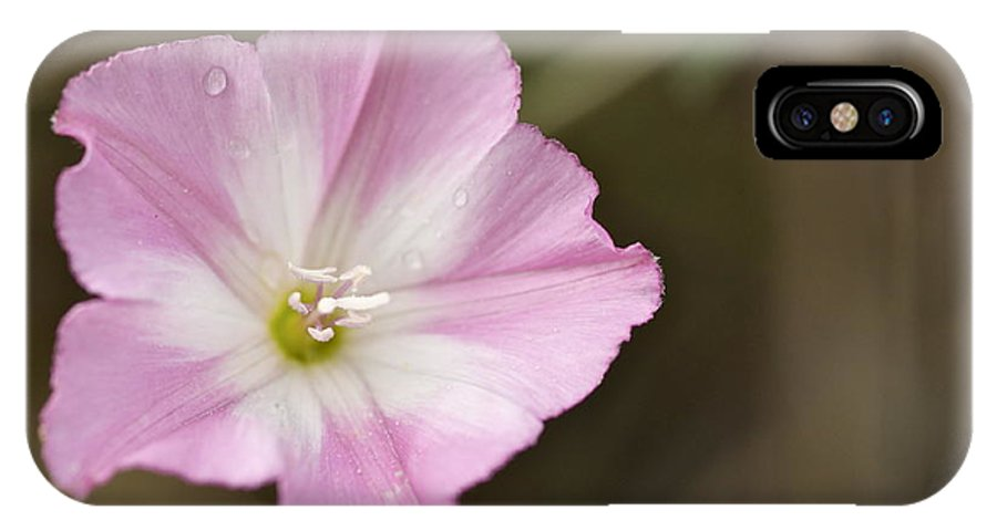 Pink IPhone X Case featuring the photograph Pink Wildflower by Graham Elliott