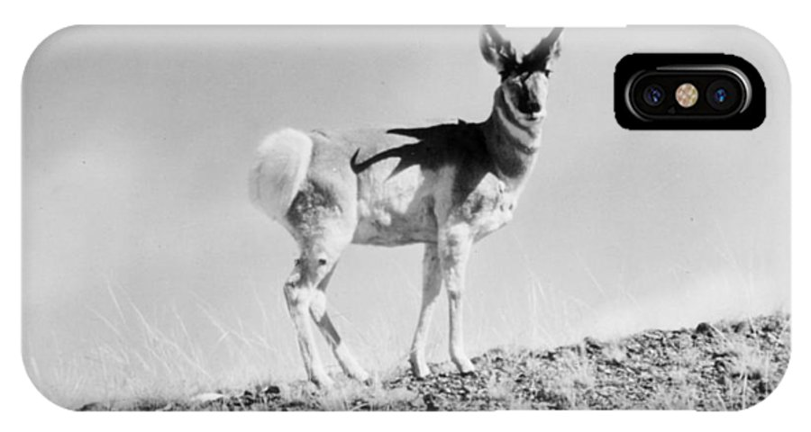 20th Century IPhone X Case featuring the photograph Prong-horn Antelope by Granger