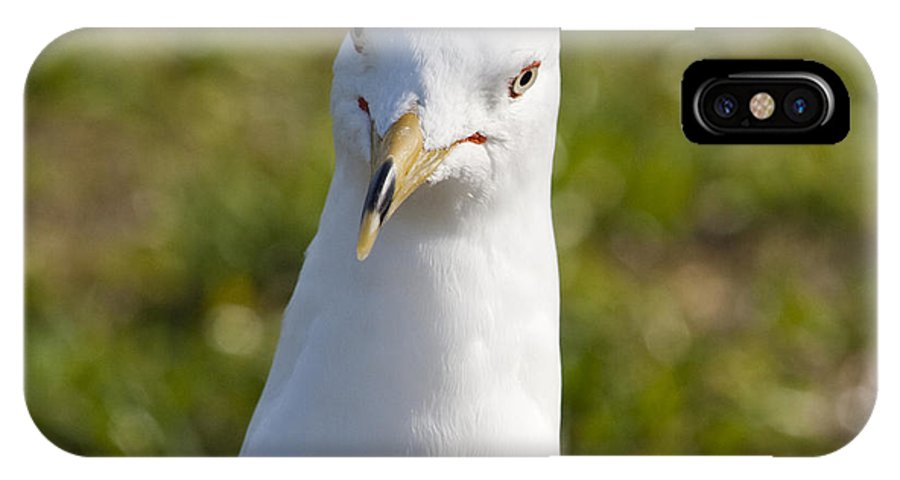 Ring IPhone X Case featuring the photograph Ring Billed Gull by Allan Hughes
