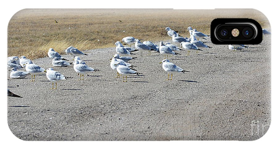 Ring Billed Gulls IPhone X Case featuring the photograph Ring Billed Gulls by Ruth Housley