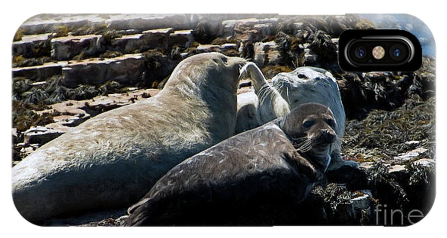 Sea Lions IPhone X Case featuring the photograph Sea Lions At Sea Lion Cove State Marine Conservation Area by David Oppenheimer