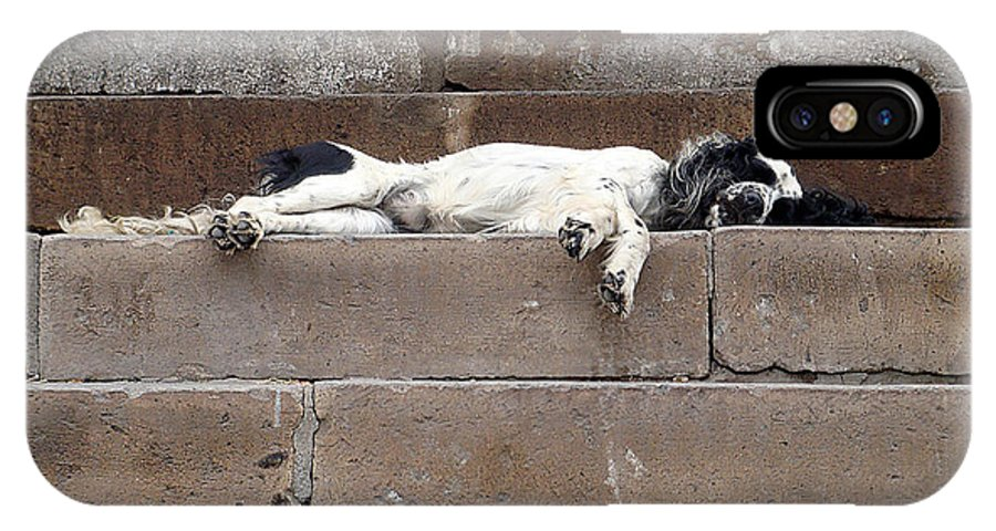Karen Zuk Rosenblatt Art And Photography IPhone X Case featuring the photograph Street Dog Sleeping On Steps by Karen Zuk Rosenblatt