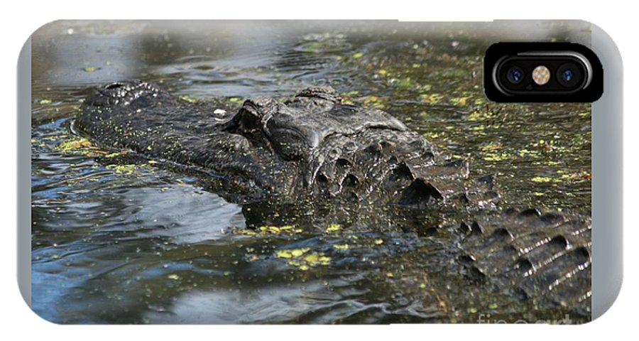 IPhone X Case featuring the photograph Sunbathing Gator by Janie Fontenot